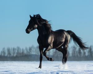 Der Mustang