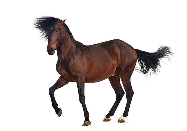 Pferde.in