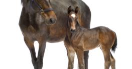 Vom Fohlen zum Pferd