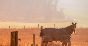 Warum eine Pferdedecke?